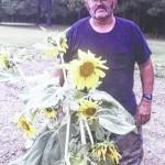 Sessoms' sizable sunflower