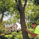 N.C. expands emerald ash borer quarantine