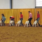 4-H'ers finish strong at N.C. State Fair