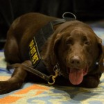 Defense contractor K2 reuniting Marines, retiring bomb-sniffing dogs