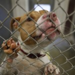 OUR VIEW: Give public a say on animal control issues