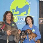 Dog trainers open obedience boot camp